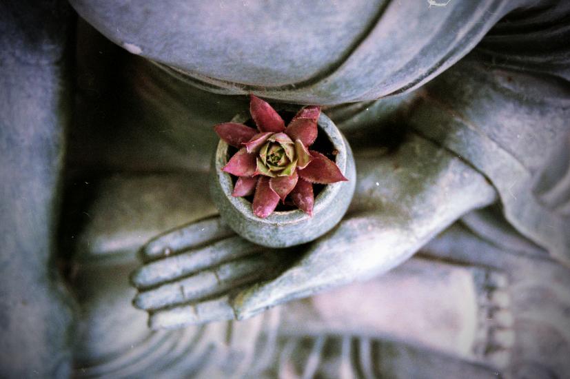 Uma flor na mão de uma estátua: os ensinamentos do Reiki evoluíram, mas partilham a mesma semente | Foto: Benjamin Balázs/Creative Commons