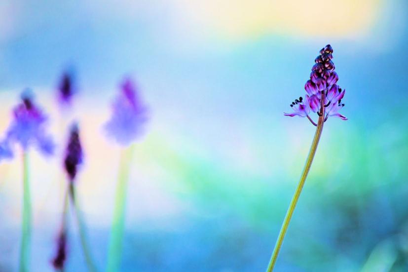 Uma flor violeta sob um fundo azul: alcançar a paz interior é descobrir o que de melhor há em nós | Foto: alexandre alacchi/Creative Commons