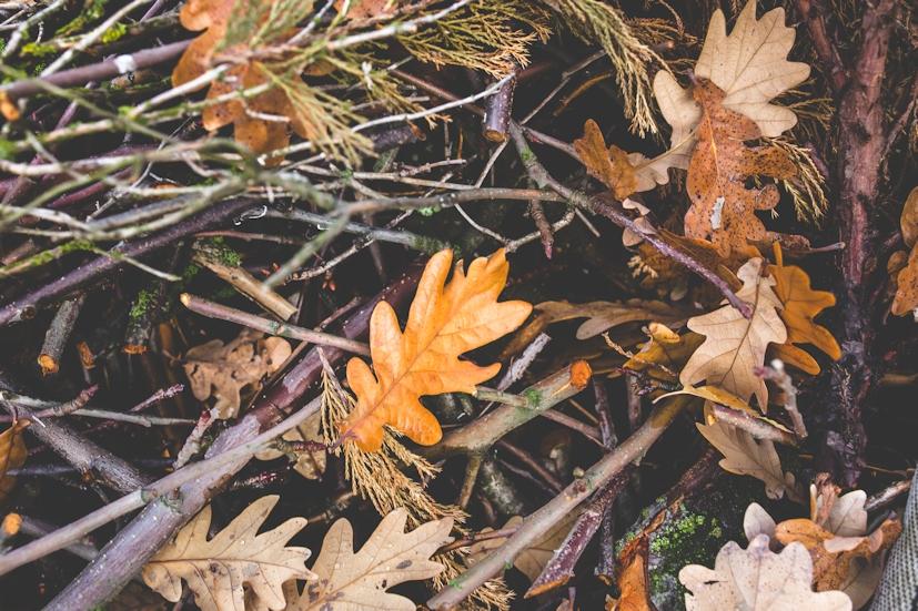 Folhas caídas de Outono: esta estação lembra-nos da importância de abrir mão do que não faz falta | Foto: Pexels